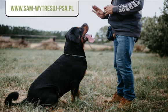 Co jest potrzebne, aby wyszkolić swojego psa