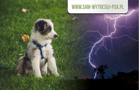 Co zrobić gdy pies boi się burzy