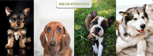 Jakie rasy psów łatwo wyszkolić